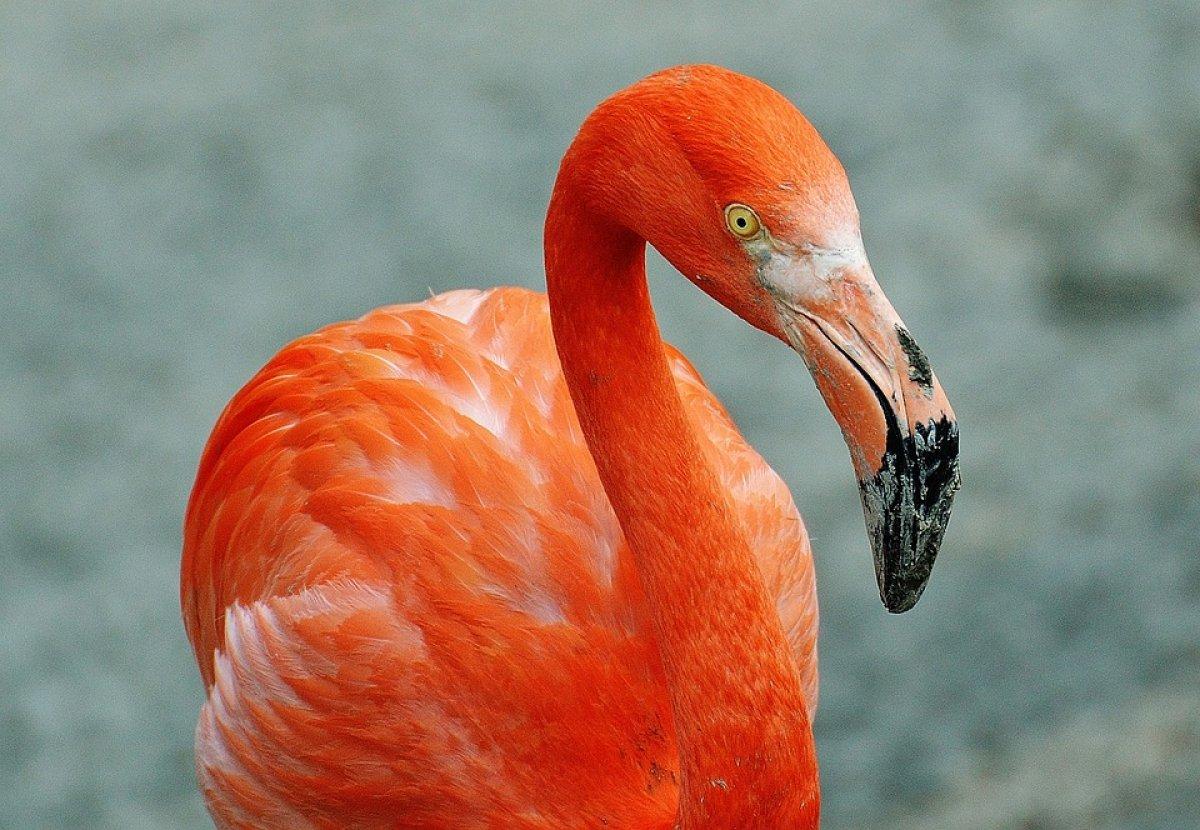 «Одноклассники» показывают диких животных