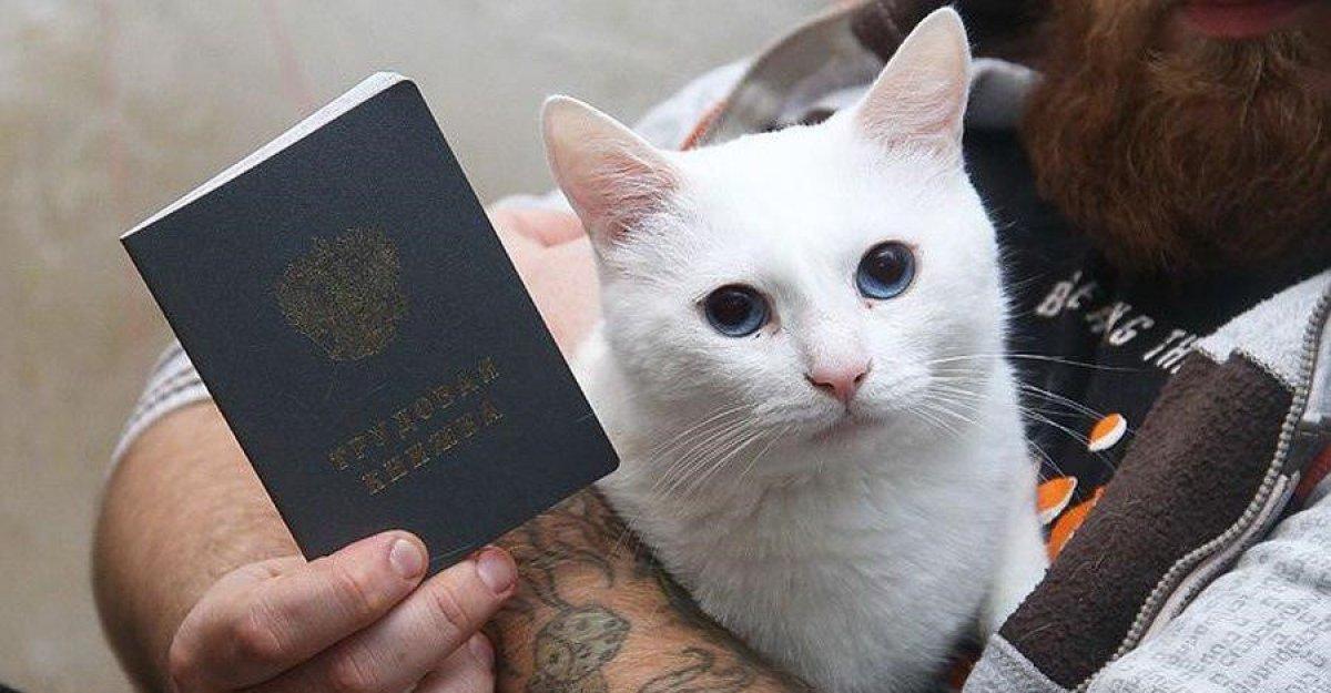 Первый трудоустроенный кот в России