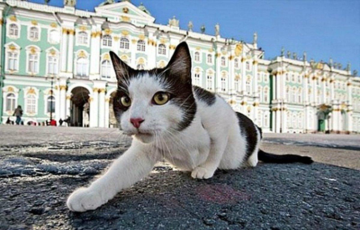 Эрмитажные коты спасены