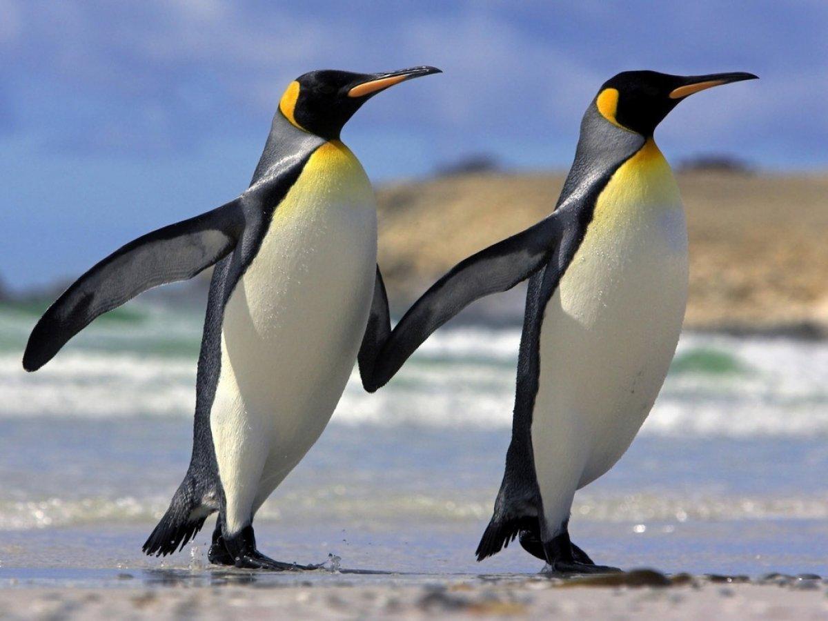 Пингвины из Антарктиды сделали селфи на камеру