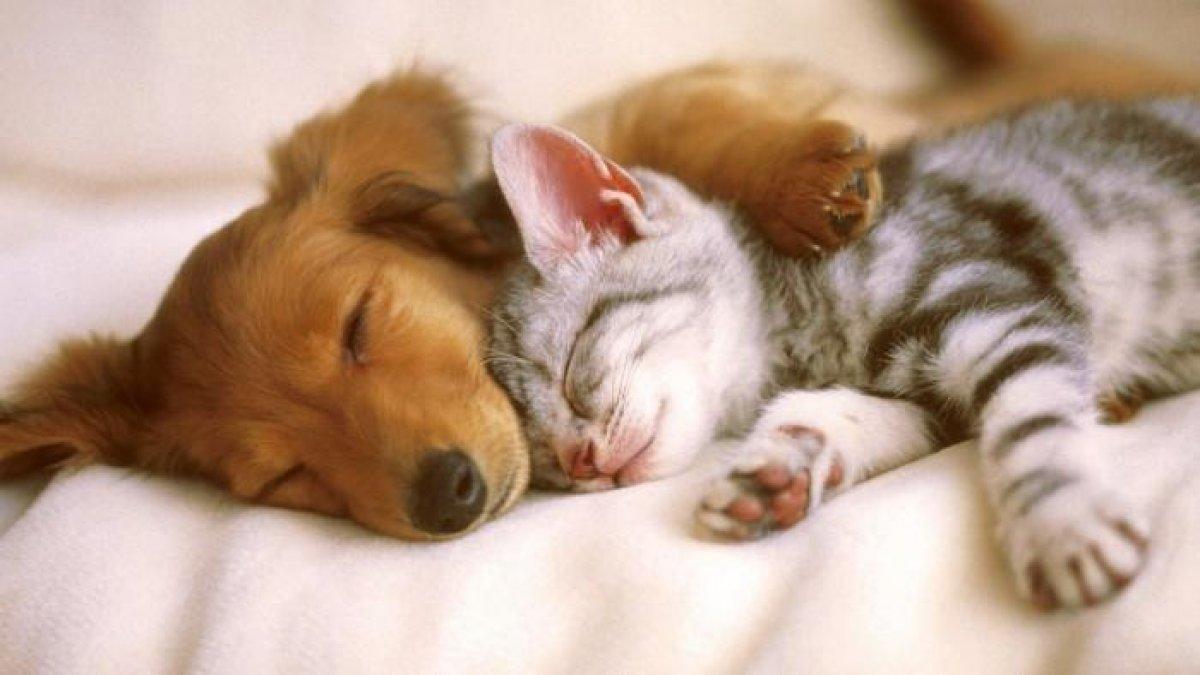 Мимими или почему котята такие милые
