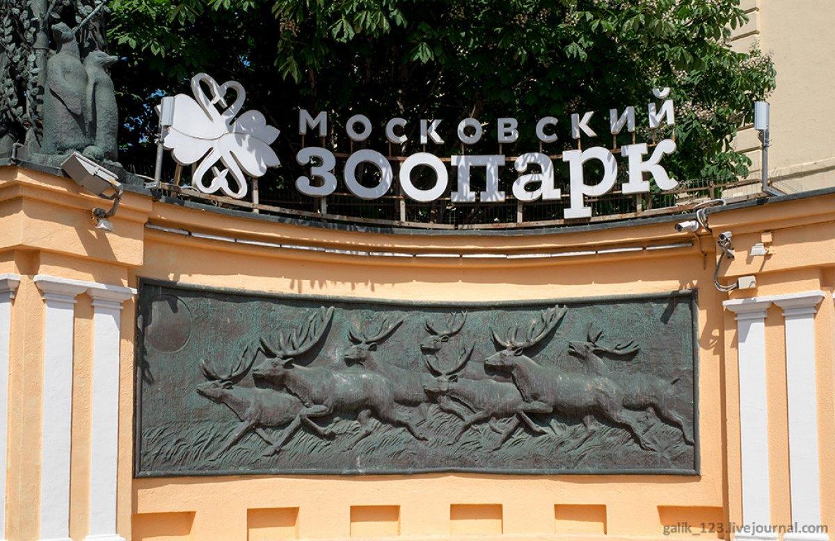 Школьники создадут гимн для Московского зоопарка