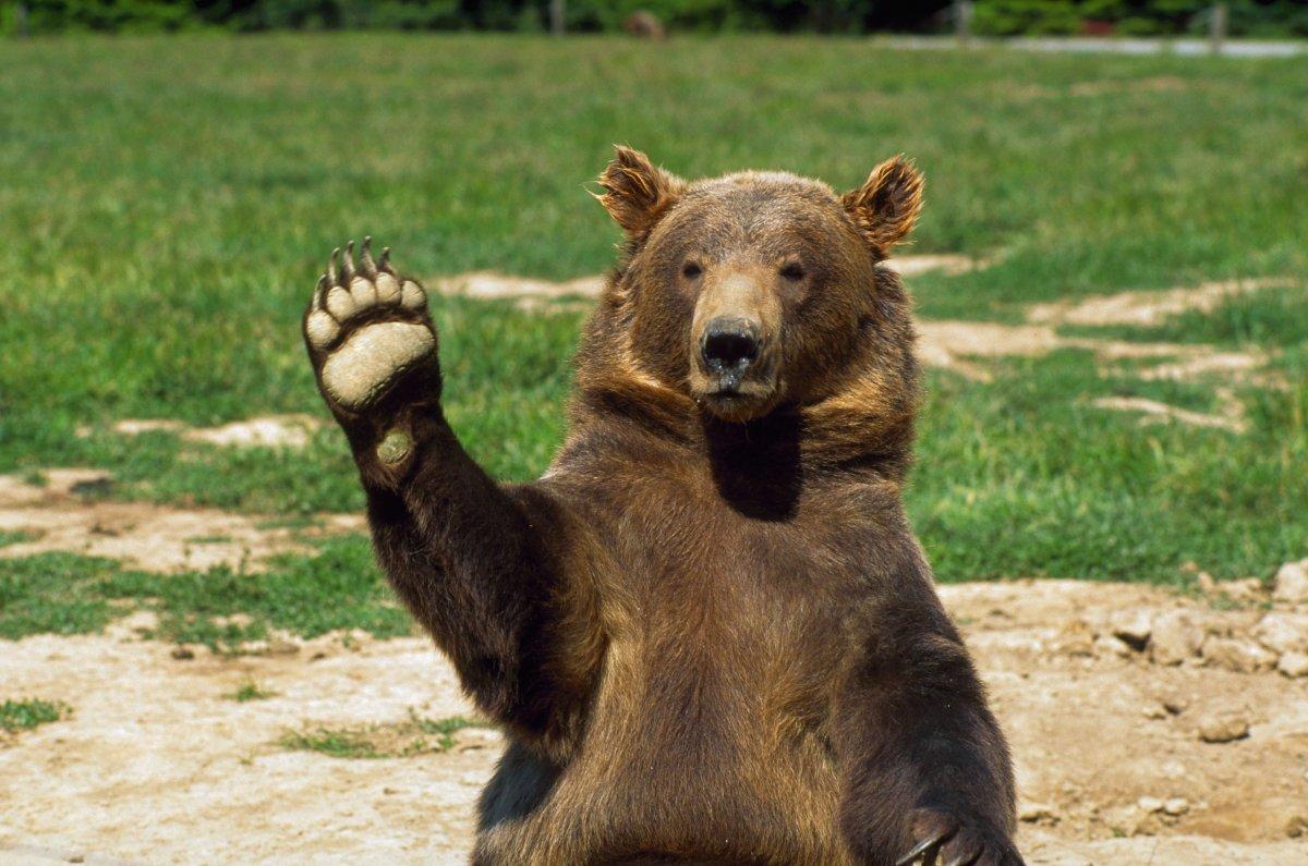Медведь есть, а где же балалайка?