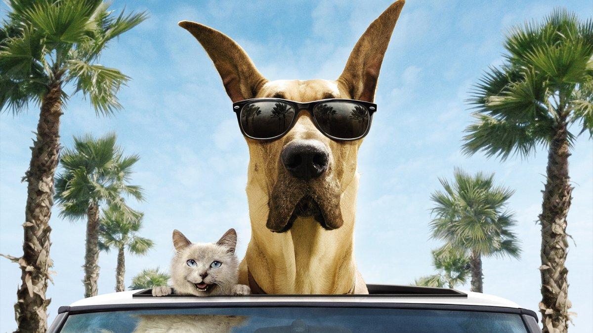 Домашним животным разрешили отправиться в путешествие без хозяина