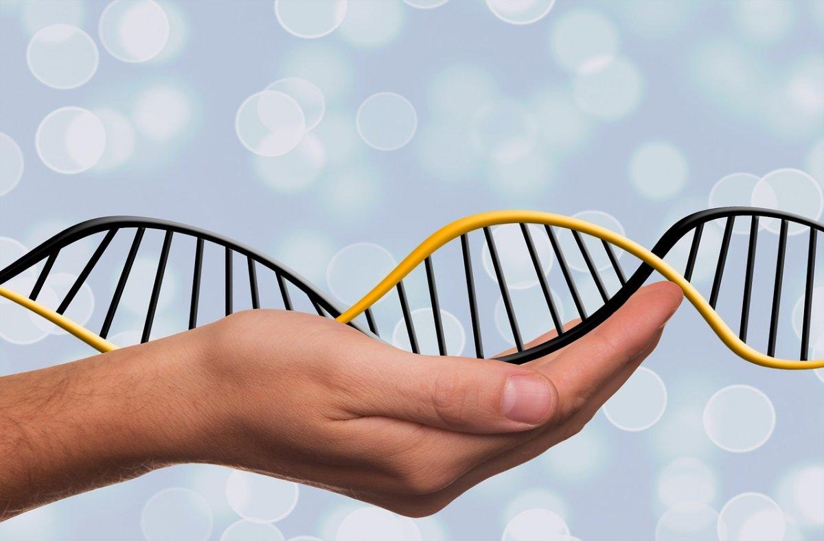 Каковы итоги «Генетической лабораторной»?