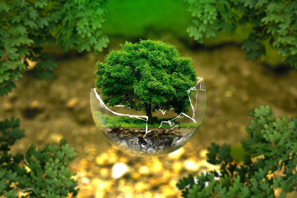 Новая идея приобщения молодёжи к экологическому поведению