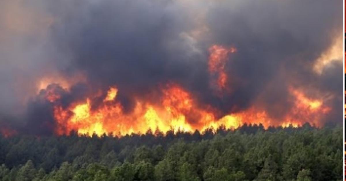 В Сибири пытаются спасти свыше 50 тысяч гектаров леса