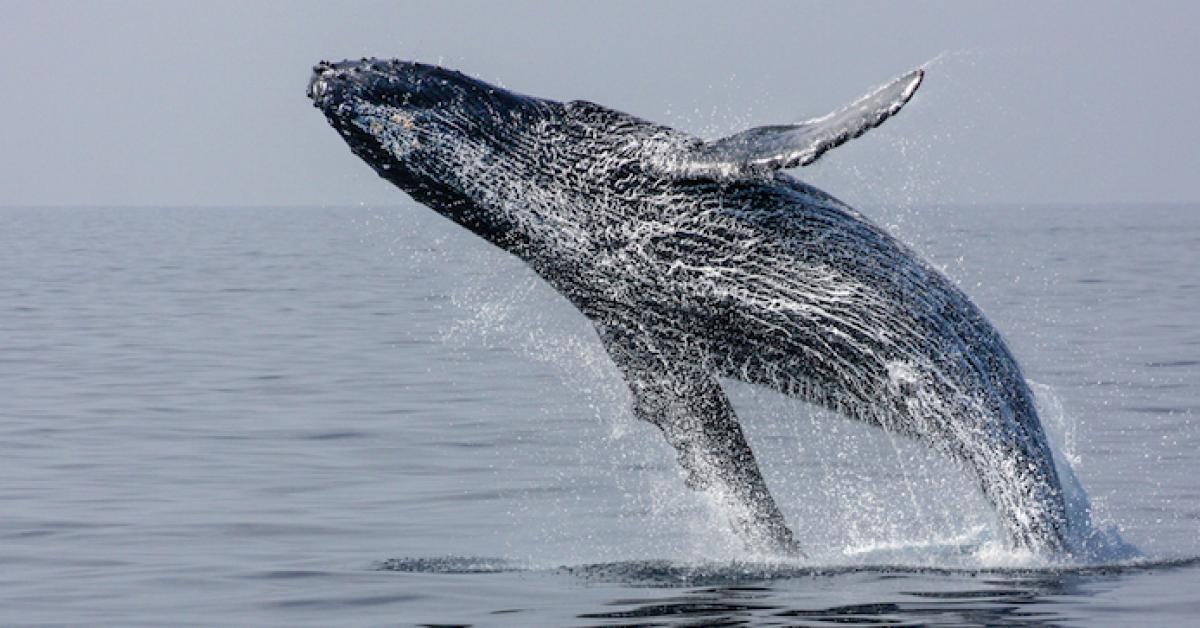 В Хабаровском крае проводятся меры по спасению жизни гренландского кита