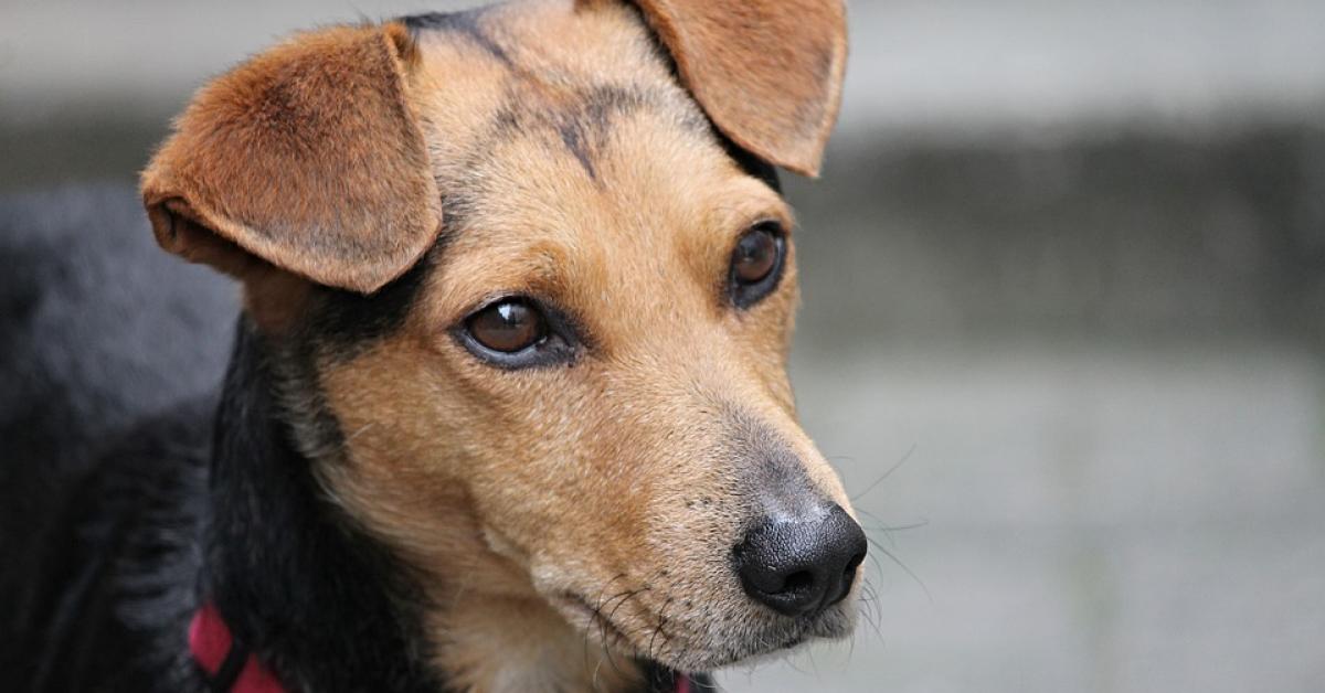 Хотят ужесточить наказание за жестокое обращение с животными