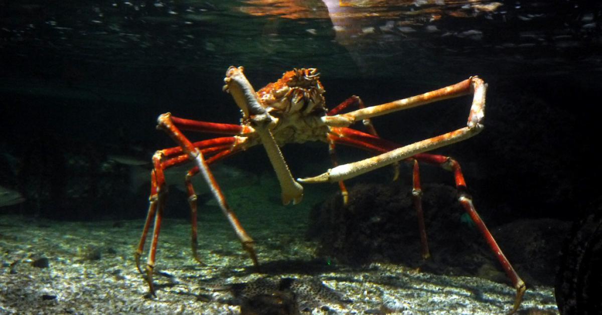 В сети показали армию крабов-пауков