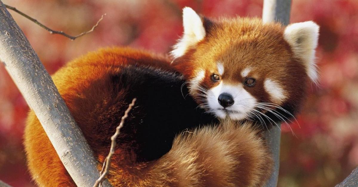 В Московских зоопарках снимут реалити-шоу с животными