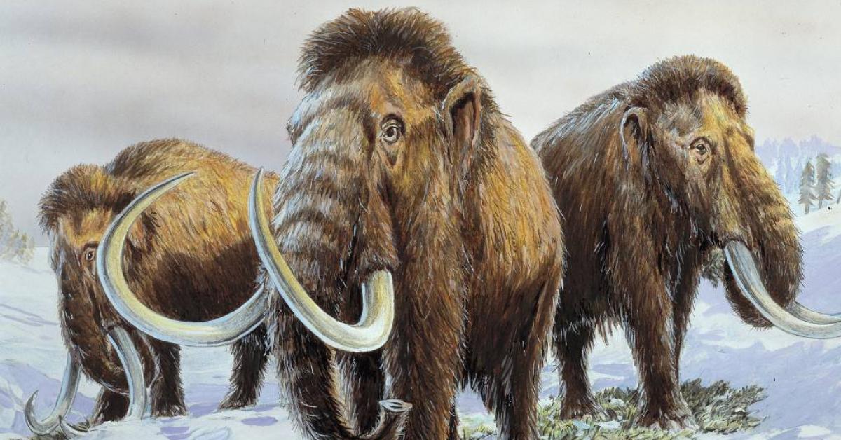 Научный мир близок к воскрешению мамонтов