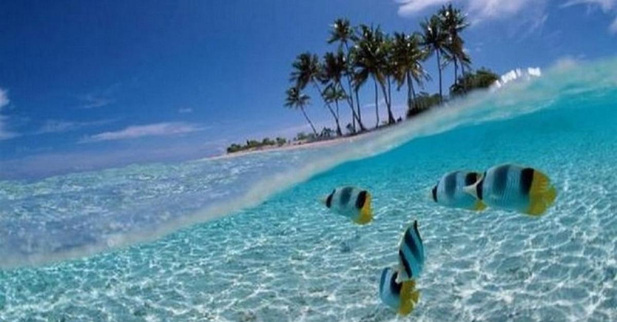 Сегодня отмечаем Всемирный день океанов