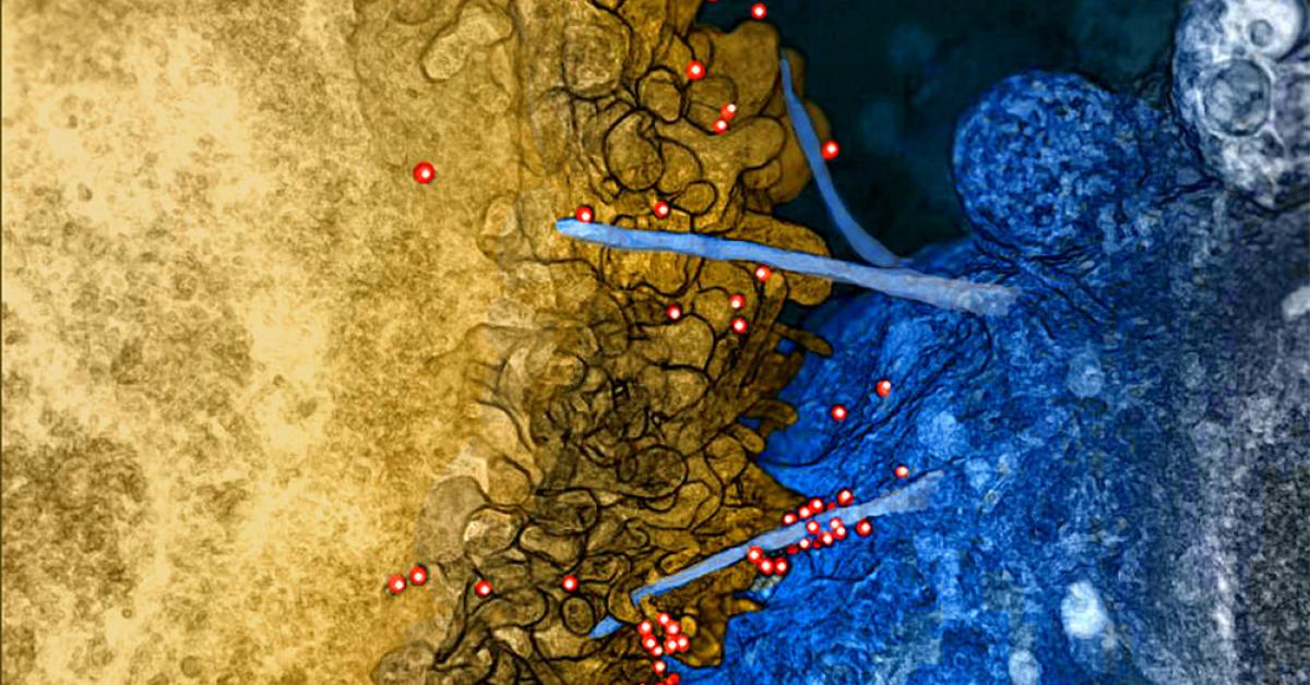 Ученые выяснили, как вирус проникает в живую клетку