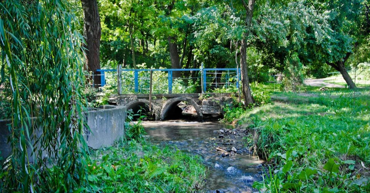 Запущен проектный конкурс на базе Ботанического сада ЮФУ