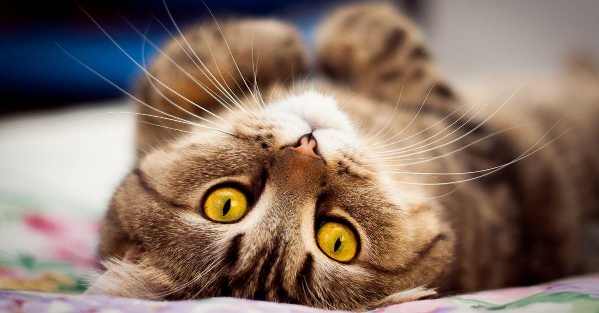 Сегодня чествуем наших пушистых любимцев - кошек!