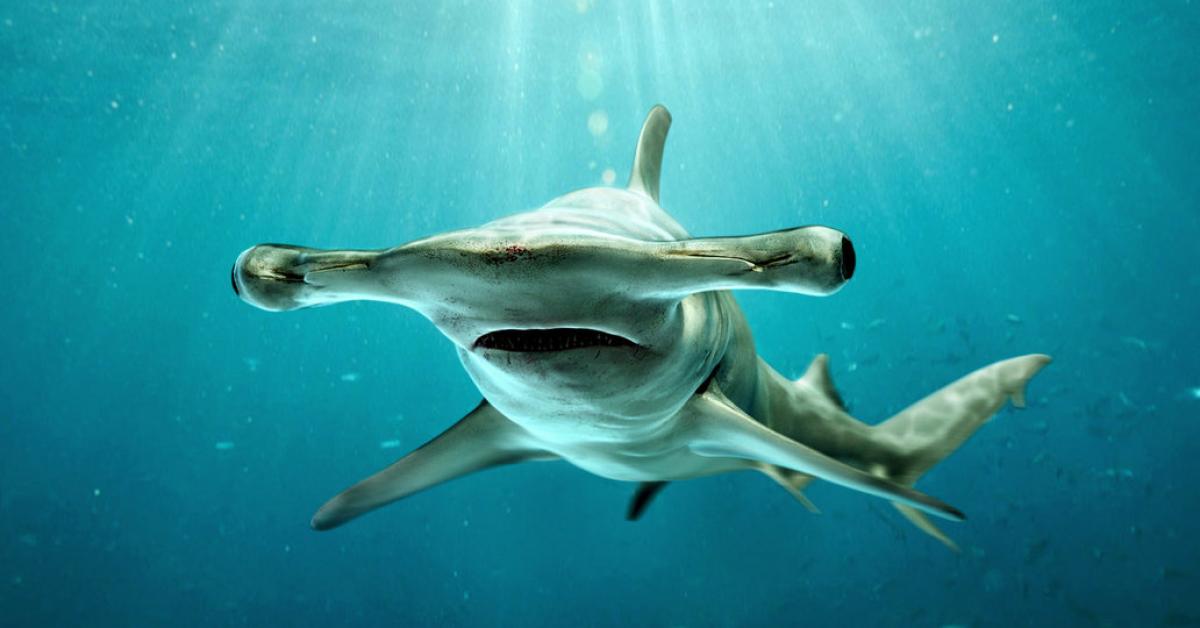Учёные превратили акулу в вегана