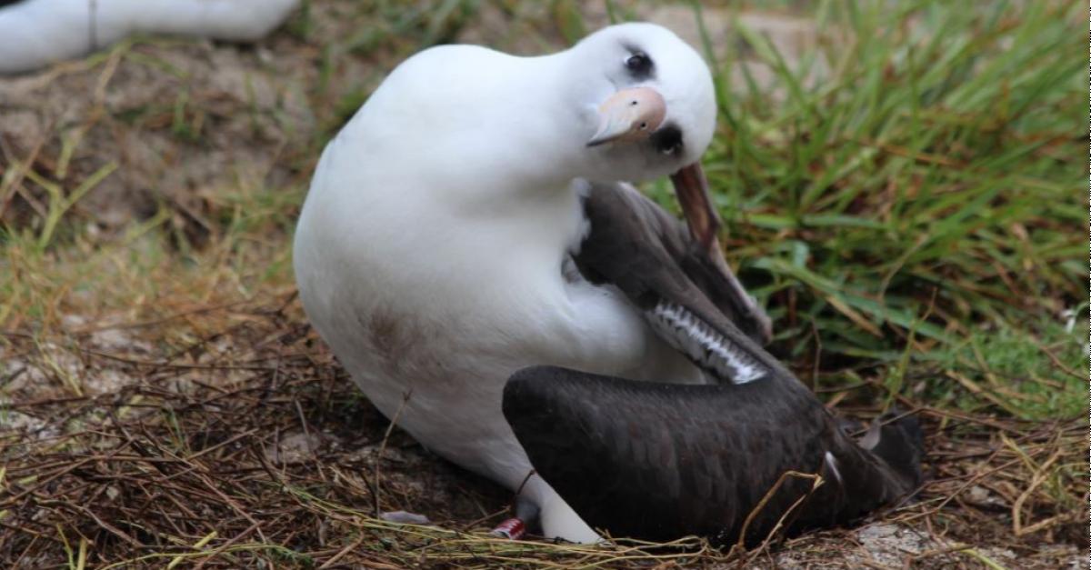Самая старая в мире дикая птица отложила яйцо