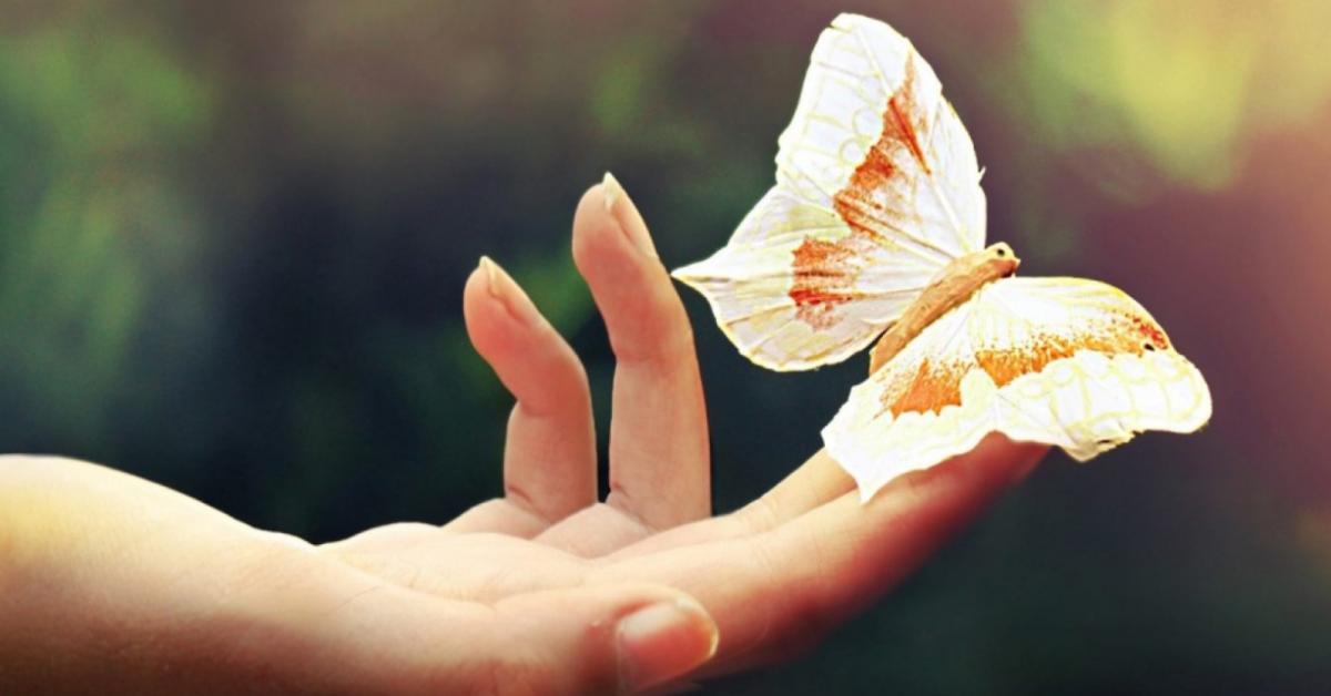 Коллекция бабочек российского учёного покорила мир