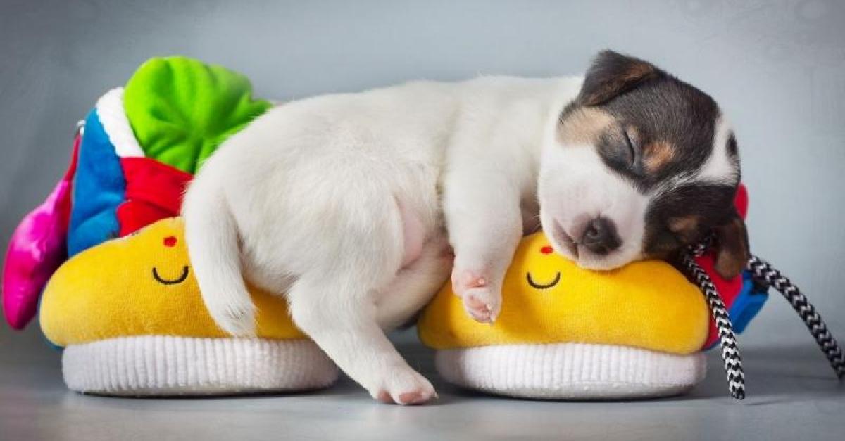 Дольше спишь – лучше учишься