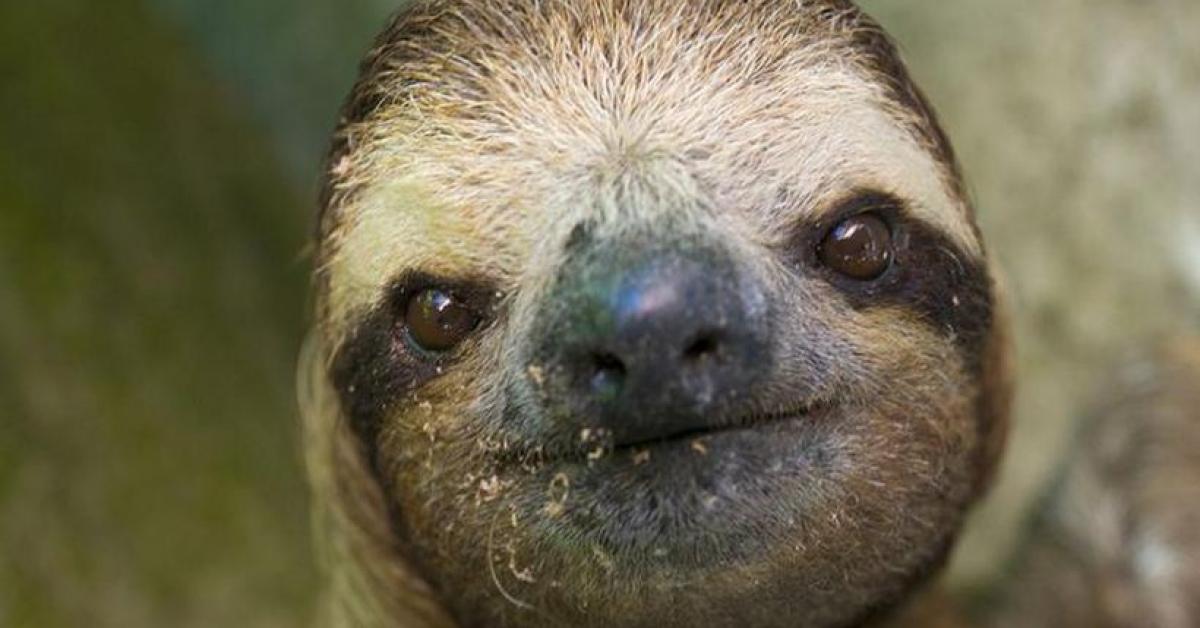 Гигантский ленивец испортил свидание
