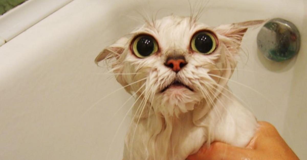 Московские школьники знают, как правильно сушить котов