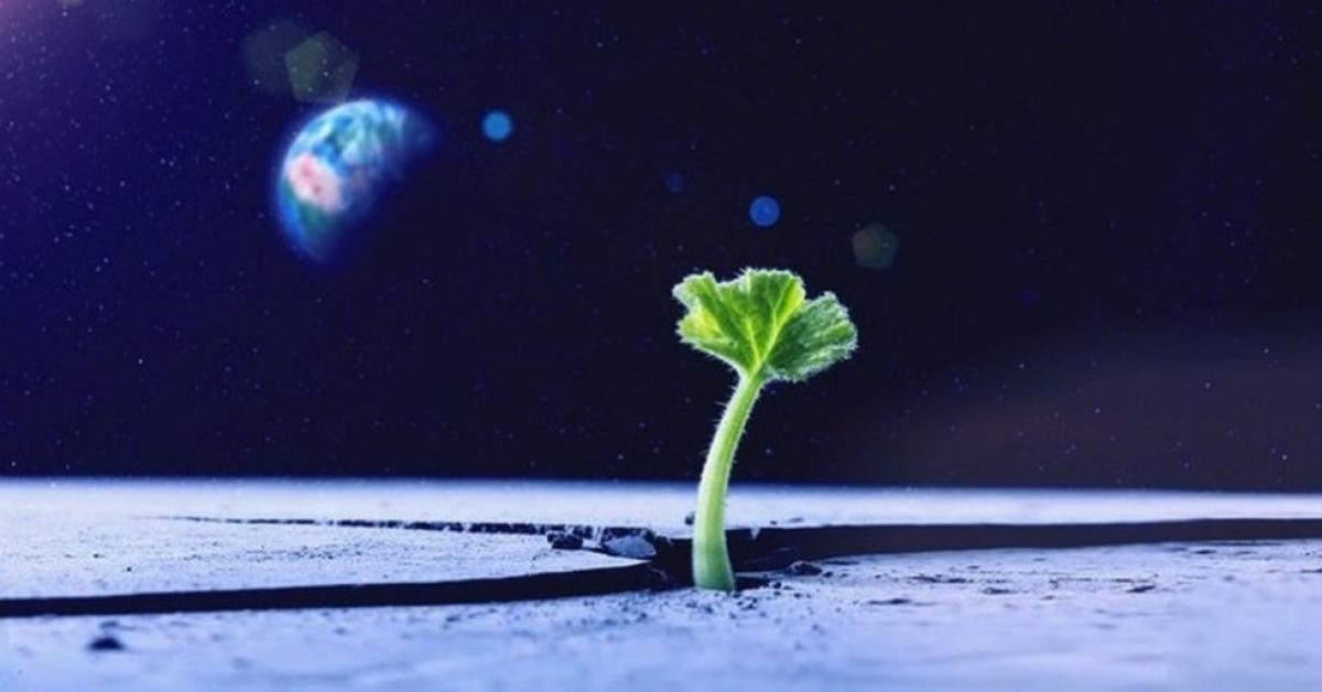 Первые на Луне растения погибнут