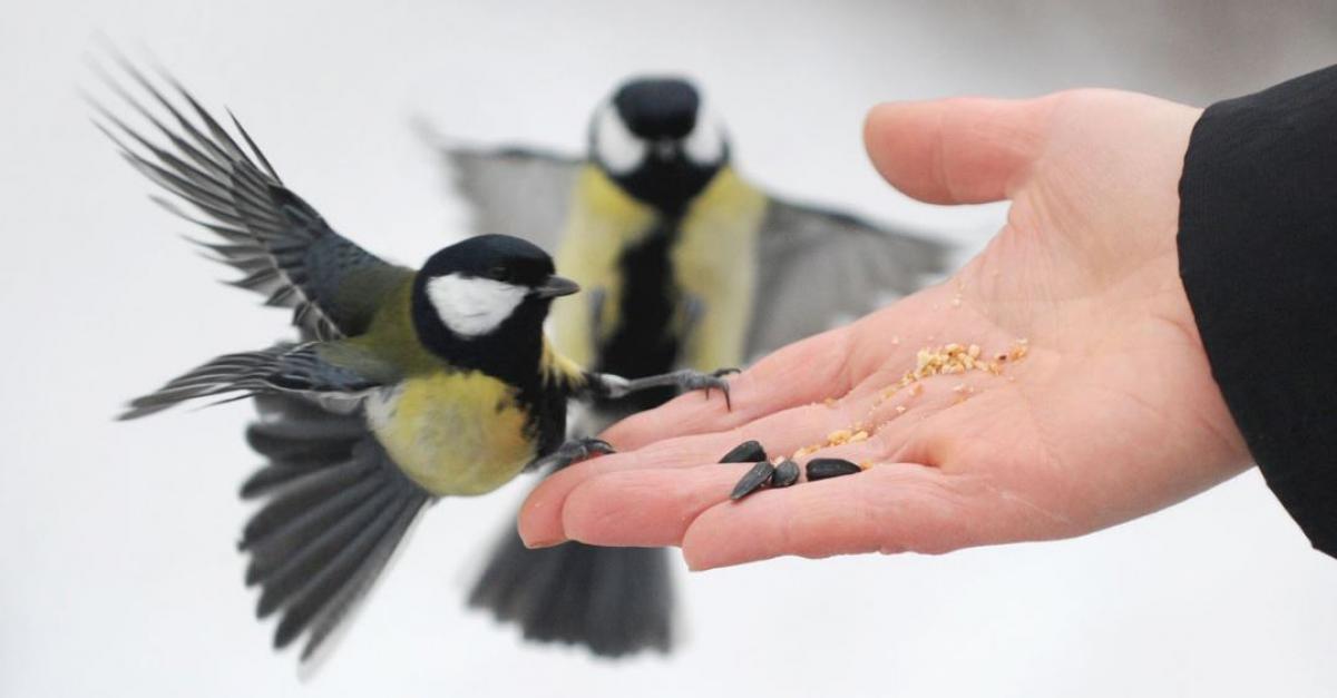 «Снежный холст»: как покормить птиц красиво