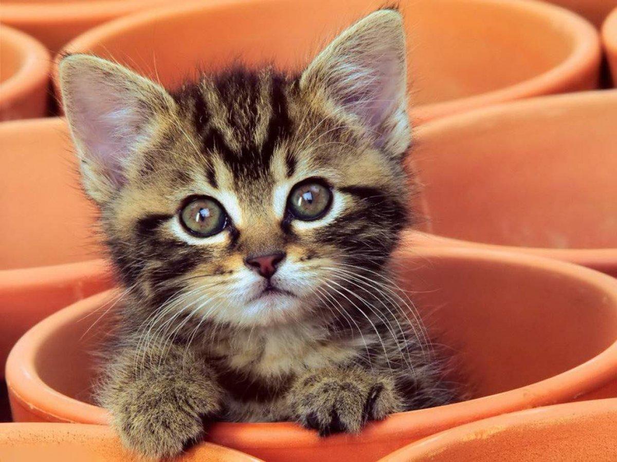 Новость от факультета БиВМ Самарского ГАУ. Всемирный день кошек