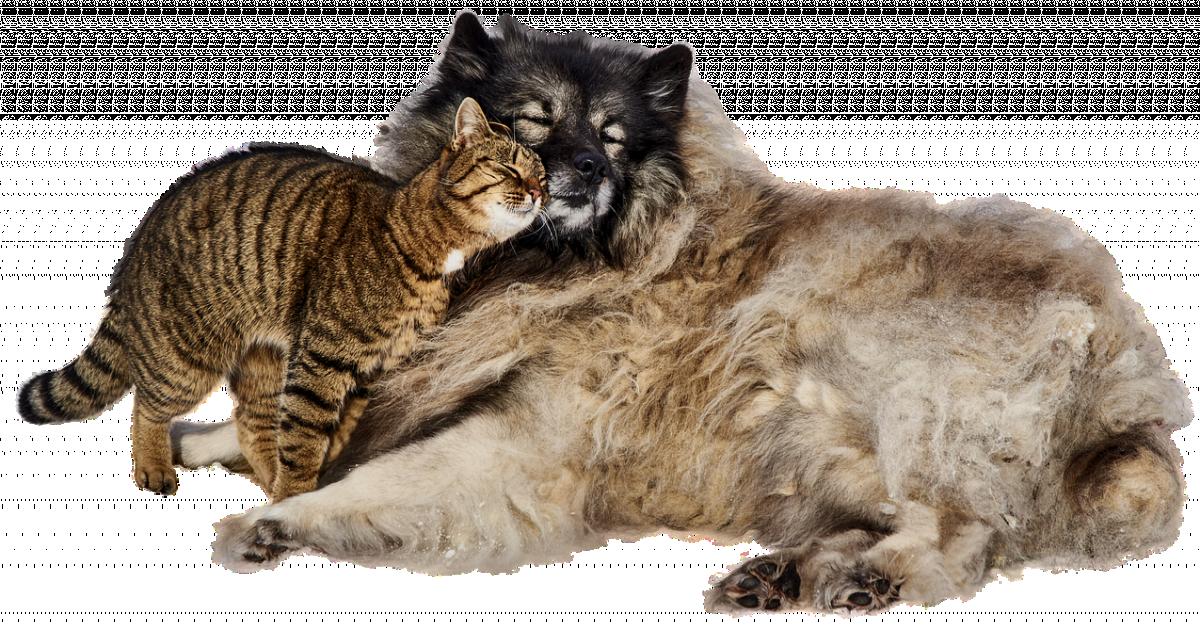 Акция #Мешокдобра: как сделать подарок бездомным животным?