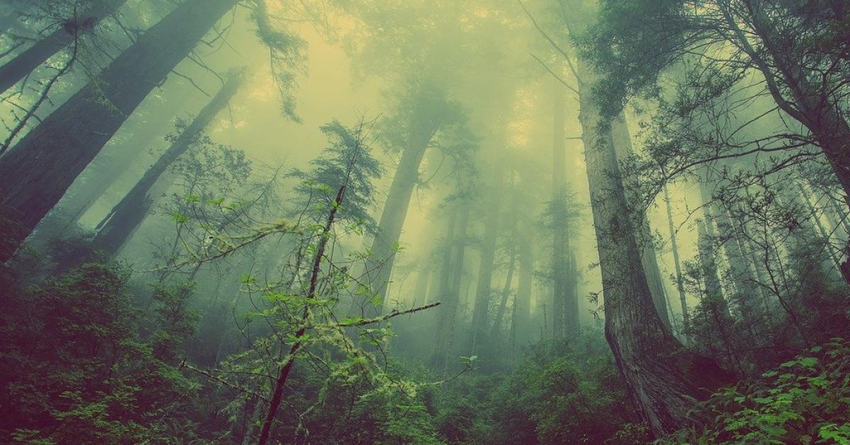 Миллион видов животных и растений исчезнет к 2070