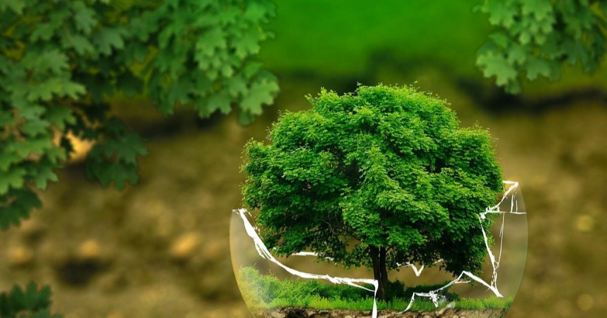 Биология стала одним из самых популярных предметов ЕГЭ-2021
